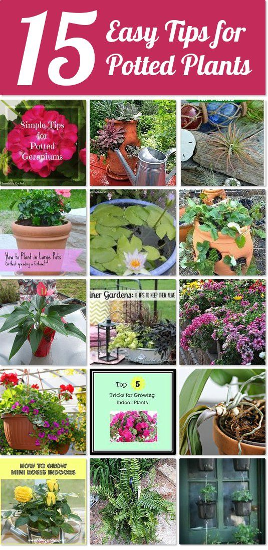 17 best images about garden and stuff on pinterest herb for Best easy care outdoor plants