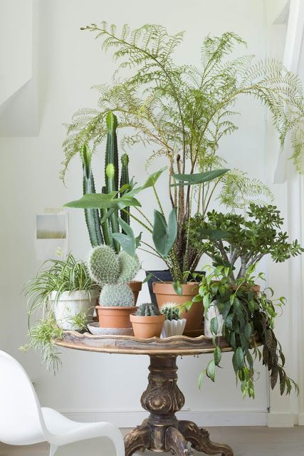 A selection of indoor plants and tropical leaves in vases and bottles