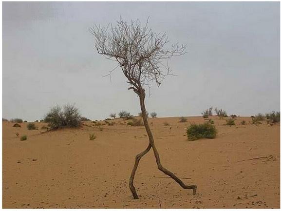 どう見ても走っている木が激写された