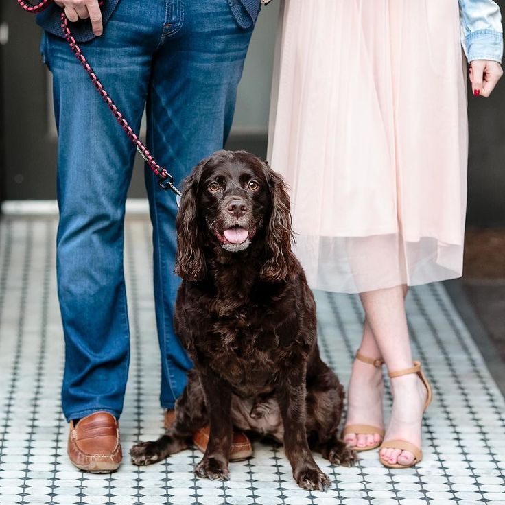 Meet Major the #boykinspaniel. He was involved in his mom and dad's proposal and also got to take part in the engagement photographs.