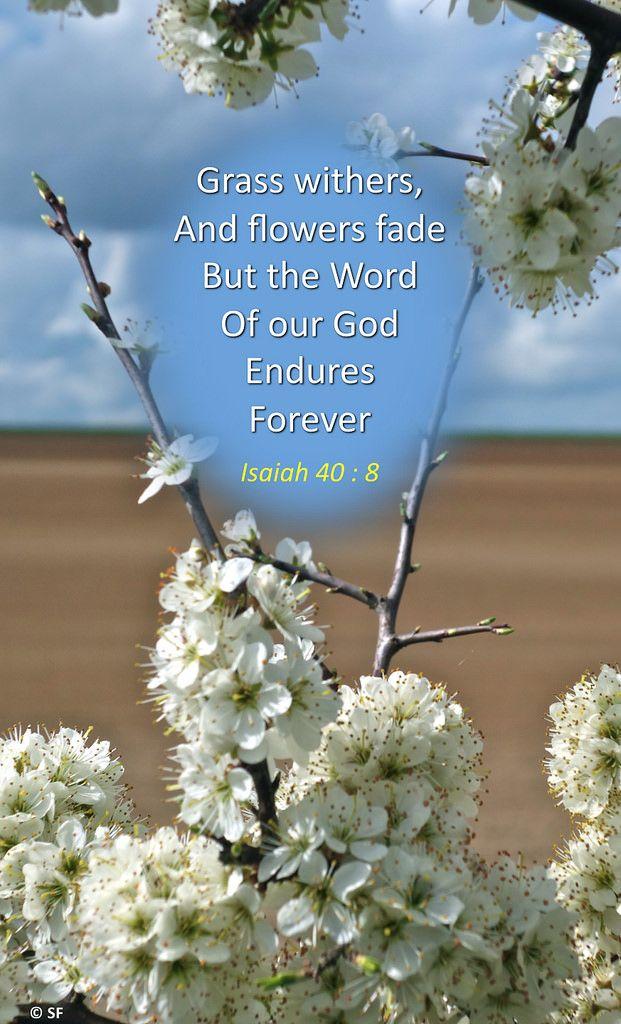 https://flic.kr/p/Tf7yjY | Isaiah 40, 8 | Ebenezer Halleluiah Creation Springtime near Plachy Buyon (Somme, France) 1rst of April, 2017