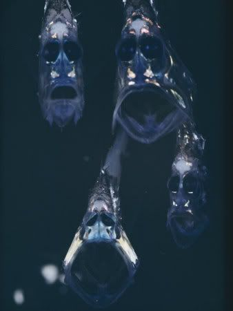 Hatchetfish found in the Mariana Trench.  This would be terrifying to encounter.