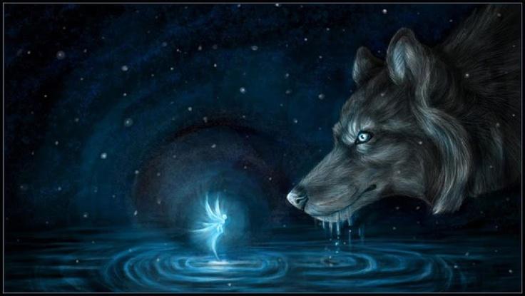Night Magic Fairy WallpaperWolf
