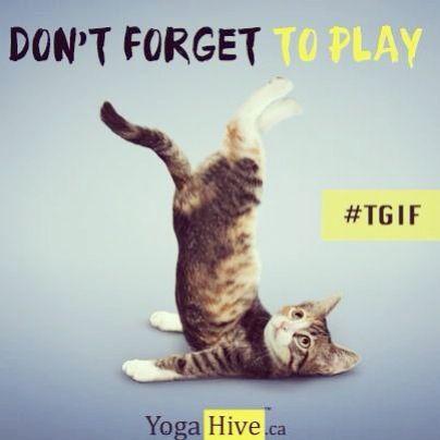 #Tgif #friday #yoga #cats