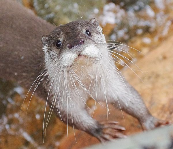 Otter, your whiskers are so long! - November 15, 2014