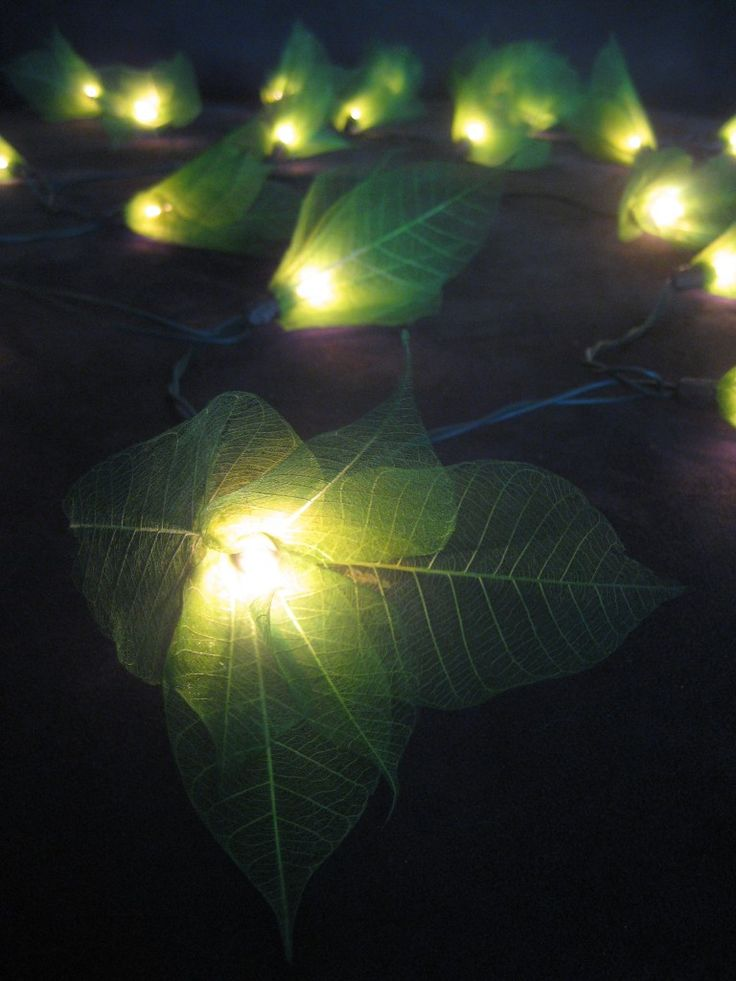 Green Flower String Lights : 17 Best images about Patio string lights on Pinterest Paper lanterns, Patio and String lights