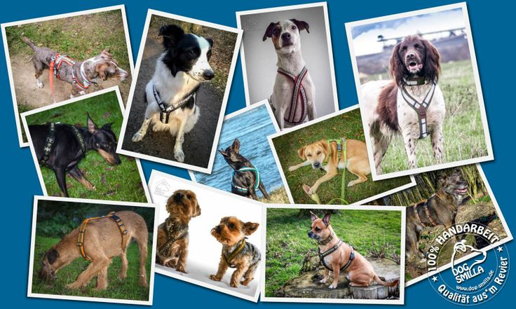 Maßangefertigte Gurtgeschirre für Hunde aller Größen. Vom Anatolischen Hirtenhund bis zum Zwergpinscher. Vom Mini Kreuzgeschirrr bis zum ausbruchsicheren Spezialgeschirr Bei uns heißt #Maßanfertigung : Der Hund wird in unserer Werkstatt in Duisburg vermessen. Unsere Produkte werden also tatsächlich auf den Hund geschneidert...wir meinen das wörtlich :-) In unserem Blog gibt es einen Beitrag mit Tipps für ein gutsitzendes Geschirr…