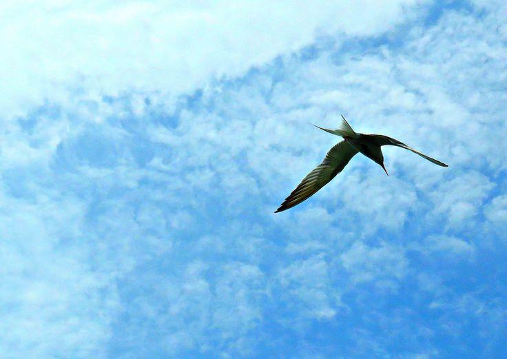 Seagull over Captree State Park, Babylon, New York. July 18, 2015.