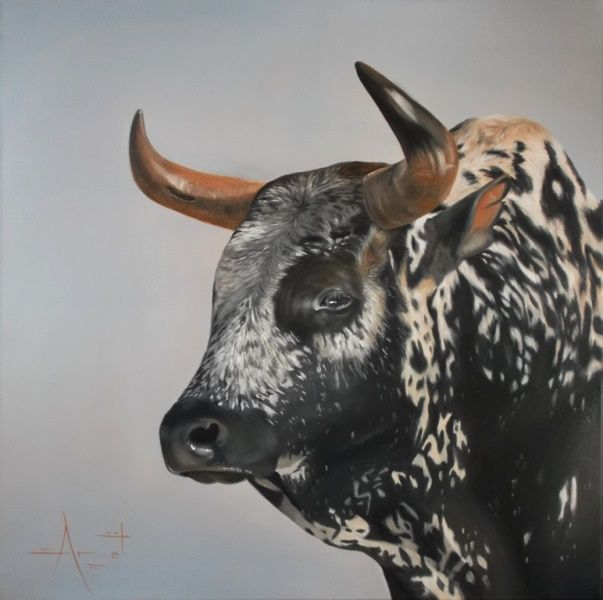 Nguni.  60cm x 60cm  Oil on canvas