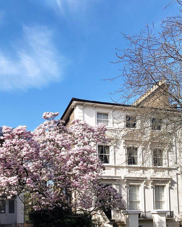 Glorious day! Sábado com sol céu azul e flores nascendo = não quero mais nada!!! Vic Ceridono | Dia de Beauté