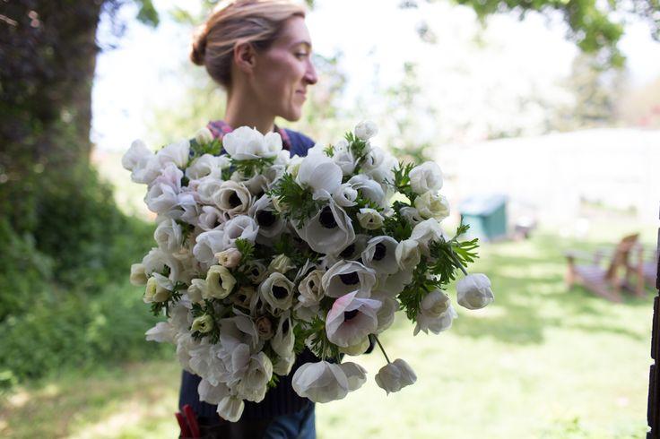 How To Grow Anemones - Floret Flowers