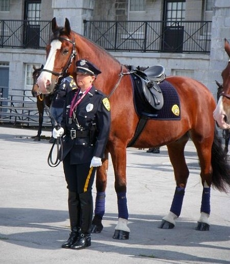 Police Horse, more at www.PoliceHotels.com