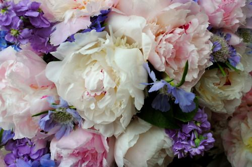 So BeautifulRomantic Flower, Flower Crowns, Wedding Bouquets, Soft Colors, Colors Palettes, Pastel Colors, Wedding Flower, Pretty Flower, Peonies