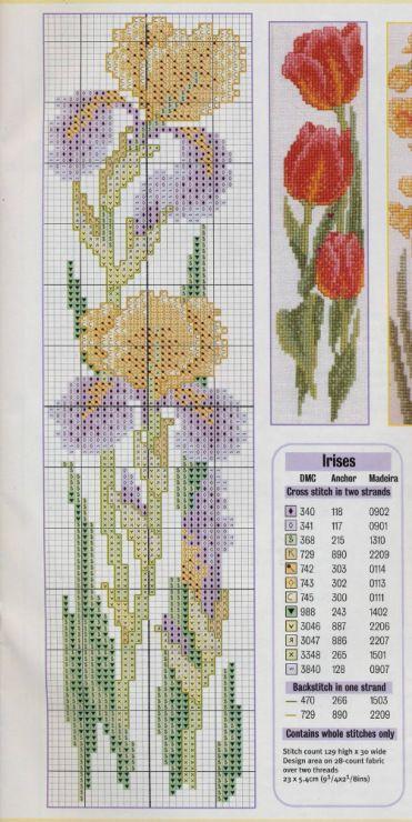 cadru iris