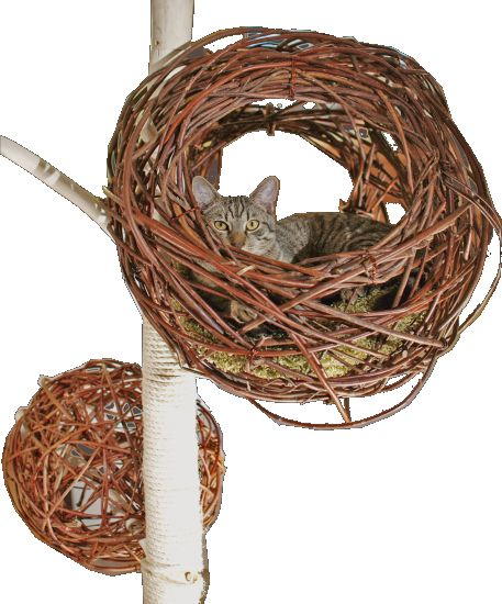 Schicker Katzenbaum mit Katzennest aus Weidenrute/cat tree with cosy nests   made of willow rod.