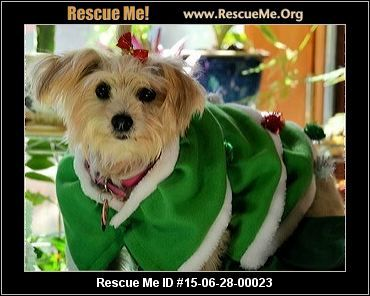 """""""Click here to view Maltese Dogs for adoption, or post one in need."""" ― ♥ RESCUE ME! ♥ ۬"""
