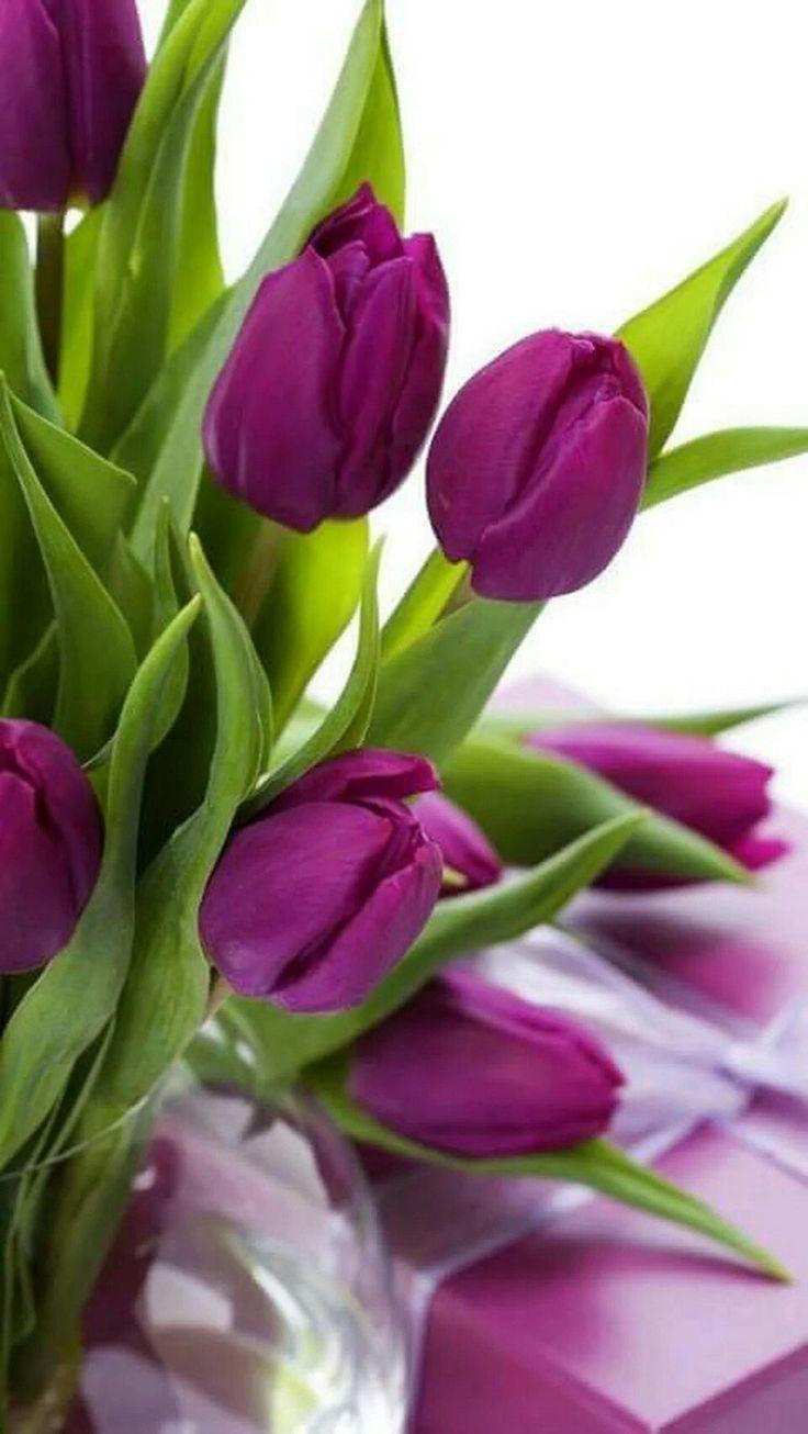 Цветы тюльпанов открытки