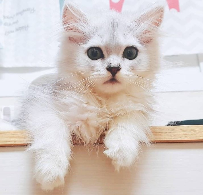 Different Type Of Cats What Kind Of Cats Are You Cat Care Cute Cats Pets Cats