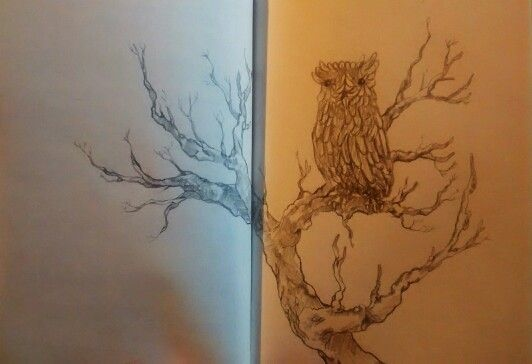 owl. by Leo Marín