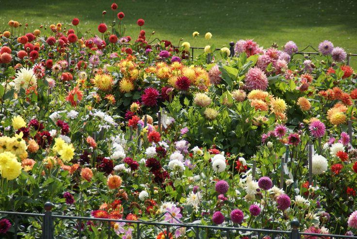 38 best gardens outdoor flowers images on pinterest - Illescas garden ...