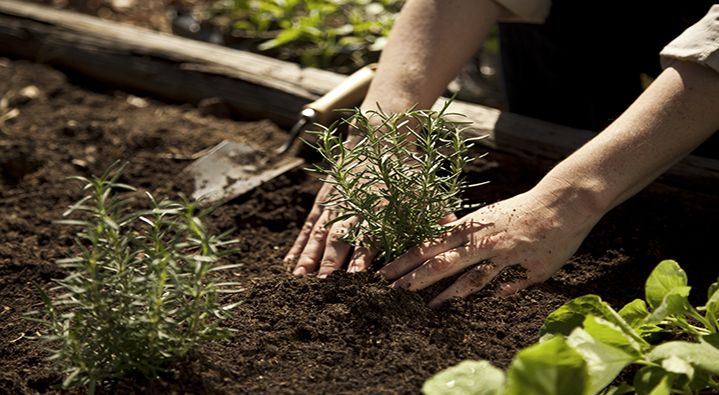Growing a Small Space Vegetable Garden - Small Spaces - Miracle-Gro