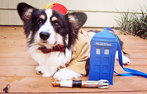 Corgi + Dr Who = ADORABLE!: Bows Ties, Halloween Costumes, The Doctors, Dresses Up, Dogs Costumes, Doctorwho, Corgi, Doctors Who, Dr. Who
