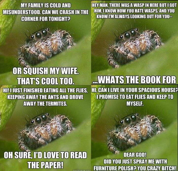 At Ermilia Blog we believe that everyone has a story to tell. Which misunderstood spider meme is your favorite?