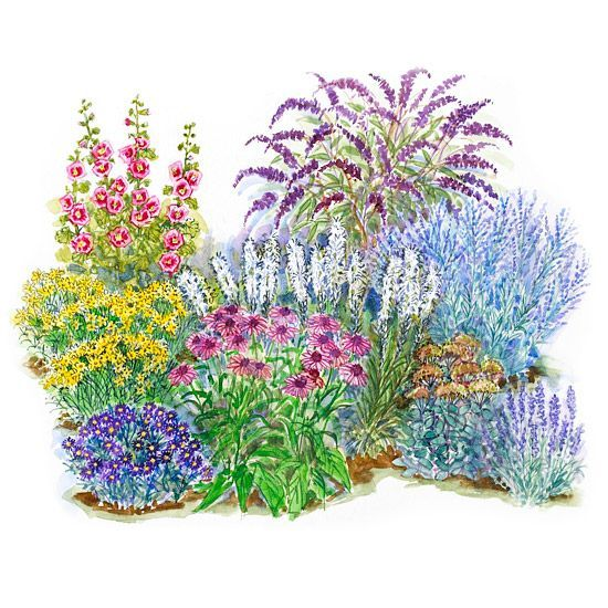 Small-Space, Easy-Care Sunny Garden Enjoy loads of beautiful color all season long with this garden plan. It features no-fuss favorites such as daylilies and purple coneflowers. Garden size: 10 by 13 feet