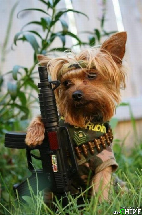 Its Hard To Hate Animals Like These 40 Photos Yorkies Etc