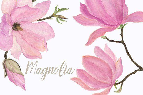 Watercolor Magnolia by ramika on @creativemarket