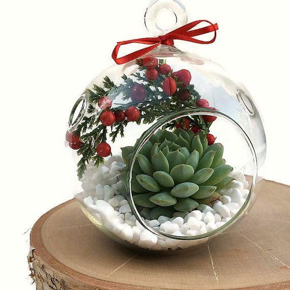 Christmas Succulent Decor.Christmas Terrarium Hanging Succulent Terrarium Diy Kit