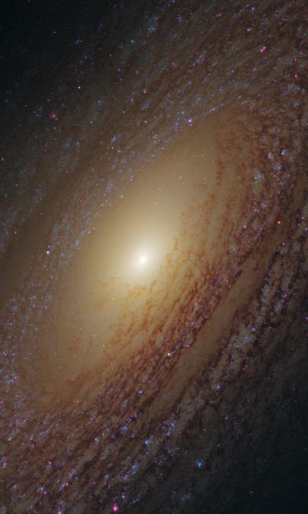 Spiral Galaxy NGC 2841 NASA's Hubble Space Telescope