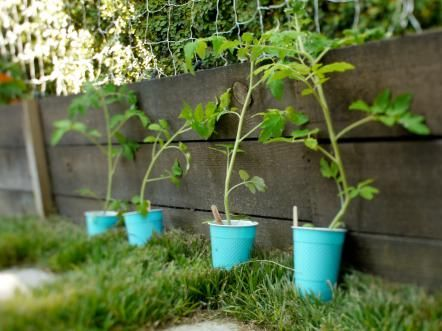 If you love delicious Caprese salads, homemade pasta sauce and BLT sandwiches, you might want to think about growing your own tomatoes this year. Check out some of these gardening tips to set yourself up for savory success.