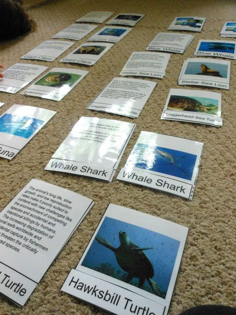 Montessori Zoology Endangered Species Ocean Animals
