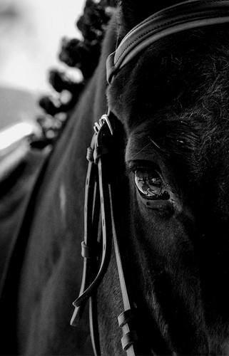.Heavens Animal, Horses Eye, Horses Black, Photography Animal, Keepcalmandrideon, Funeral Horses, Horses Zebras, Horse'S N