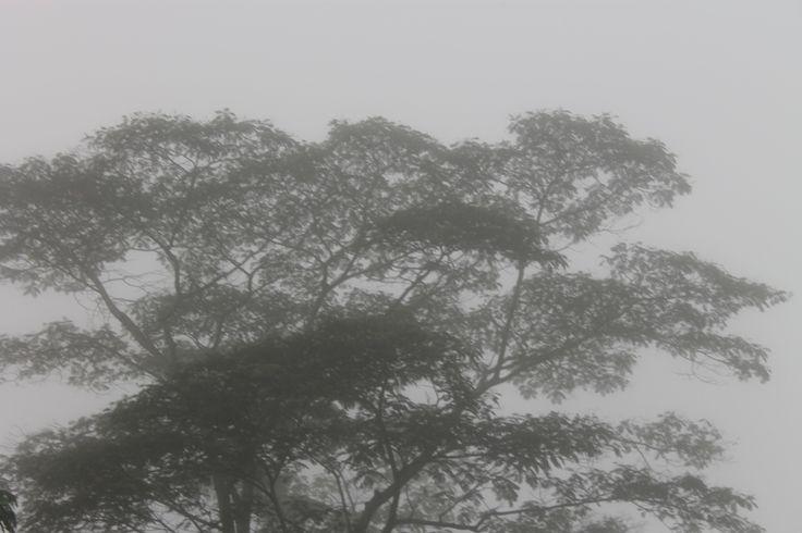 kabut tebal pagi ini