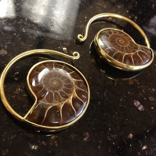 Amazing ammonite jewelry