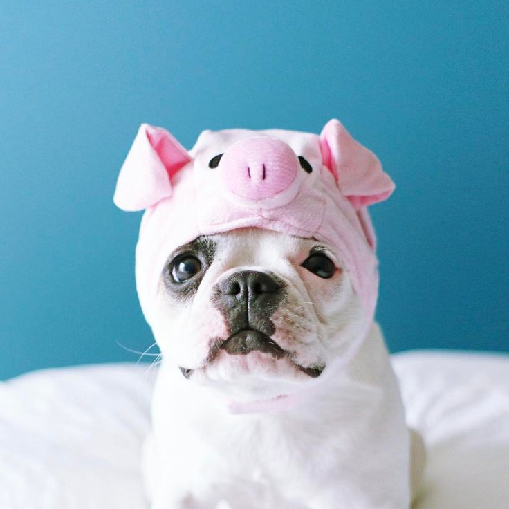 I You Like A Pig Loves Not Being Bacon Instagram Cute