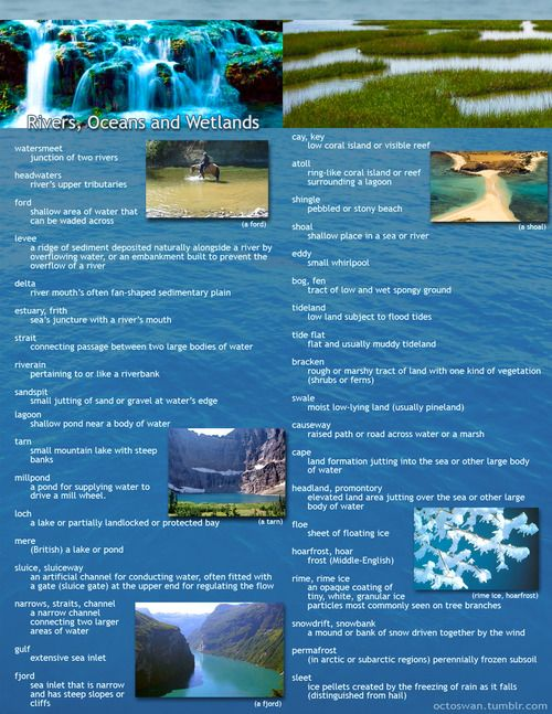 wetland essay A wetland is the territory which is covered with water seasonally or all the year round a wetland is a specific ecosystem, because some animals, insects and plants can survive only in such lands.