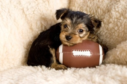 Just because. #superbowl #puppy