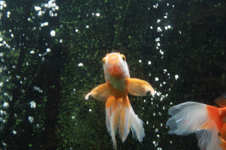 鱼 动物园的鱼