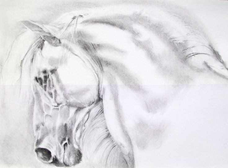 """Andalusian. My beautiful,incredibly talented friend did this one.really love this """"max""""One of my favourite's,of your's.xx"""