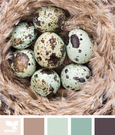 Speckled Tones - feather brown, brown, turquoise, deep teal, & deep brown. Robin's Egg colours.