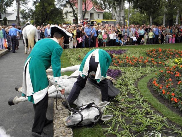 В Одессе на открытии памятника Суворову от голода упала лошадь. ФОТОрепортаж+Видео
