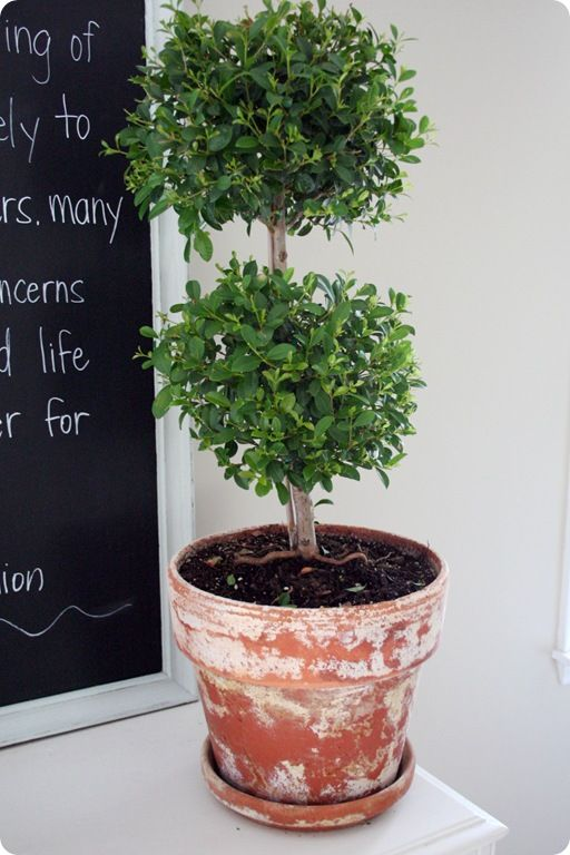 130 best Container Garden Pot Types and Ideas images on Pinterest