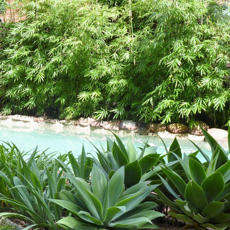 Tropical garden, Rose Bay Sydney