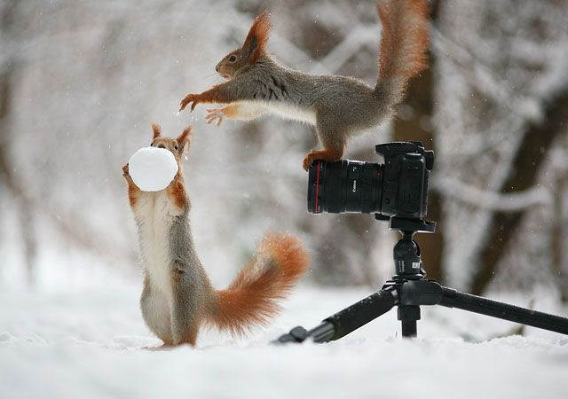 Russian photographer Vadim Trunov recently captured a series of photographs showing wild squirrels doing human things. In the snow covered forests outside the city of Voronezh in western Russia, Trunov set out some props and waited with his camera as a pair of squirrels entered his makeshift set.