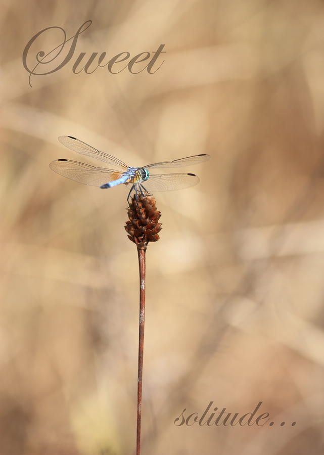 188 best Dragonfly images on Pinterest | Dragon flies, Butterflies ...