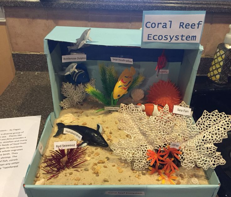 Coral Reef Ecosystem  $10 budget. Used acorns, spray painted Christmas decorations and toys.