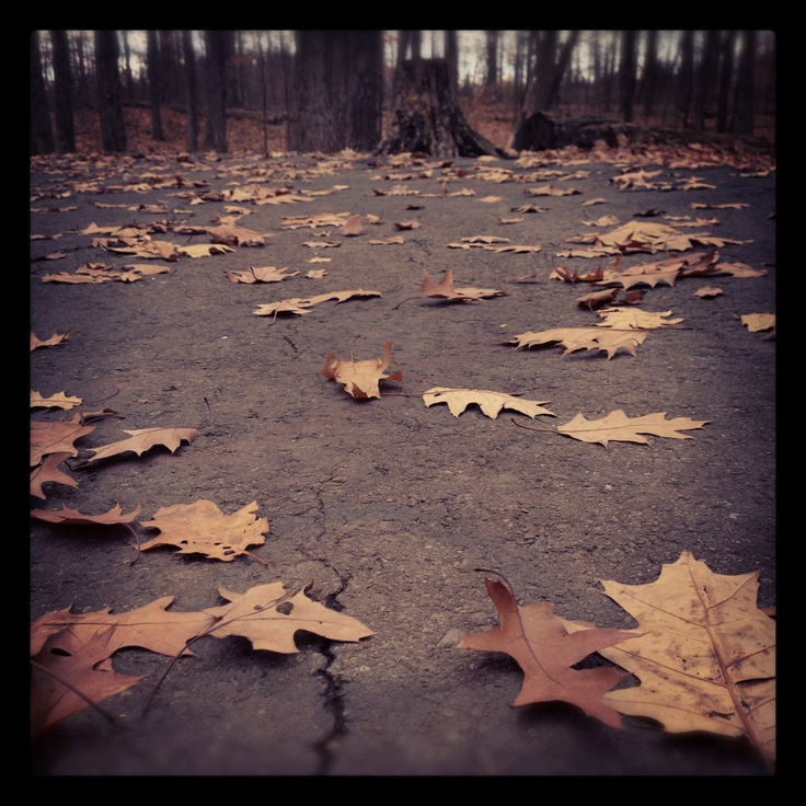 Walking through the park while leaves fall